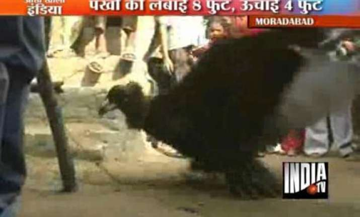 huge predator bird found in moradabad up