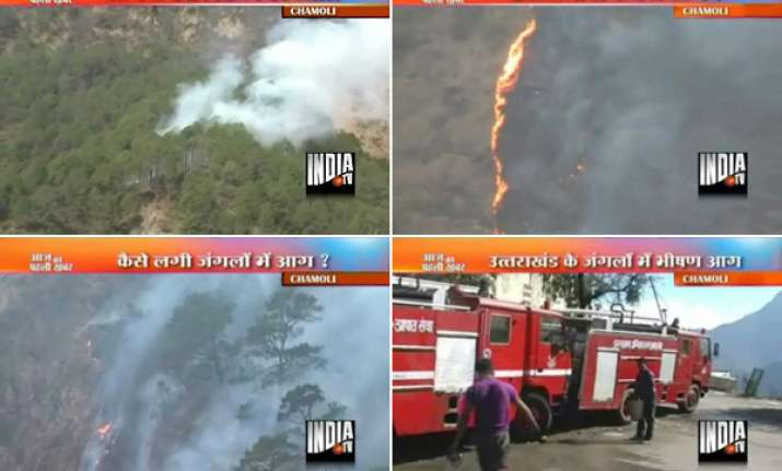 hundreds of trees plants gutted in forest fire in
