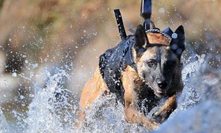 obama in india dog officers arrive to further tighten the