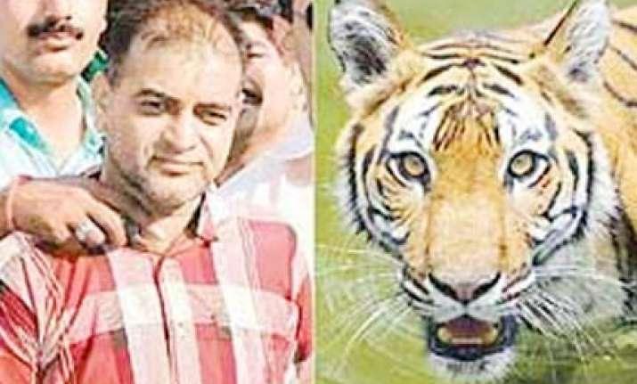 supreme court dismisses poacher sansar chand s appeal