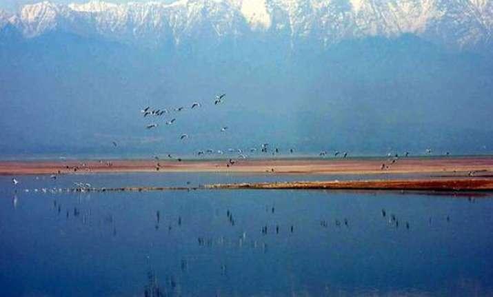 mild winter dips migratory bird count in pong wetlands