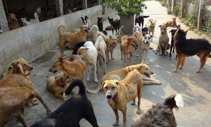 export stray dog meat to china kerala gram panchayats