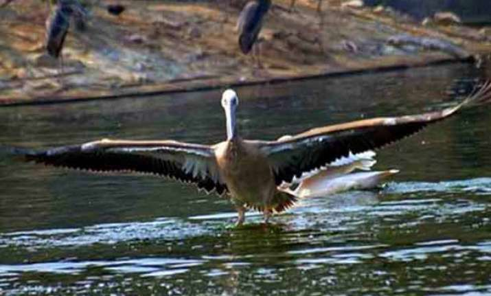 top 10 famous bird sanctuaries of india