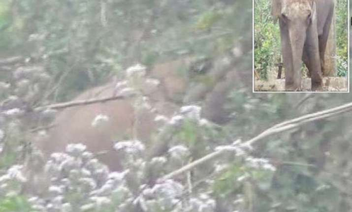 madly in love male wild tusker breaks into odisha zoo to