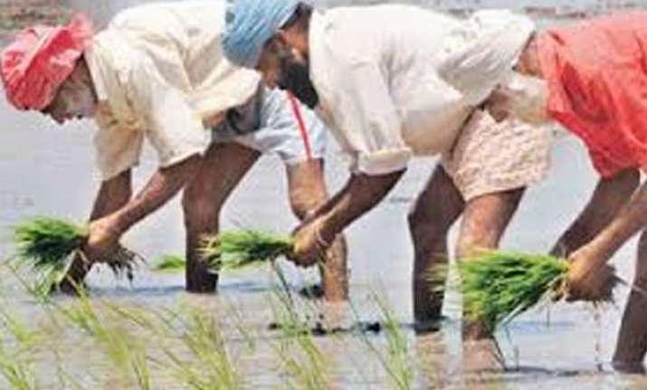 rain affects life in chandigarh punjab farmers happy