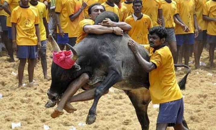 peta slams centre s decision to allow jallikattu