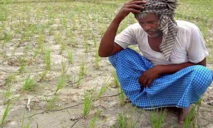 drought hit maharashtra sees 40 increase in farmer suicides