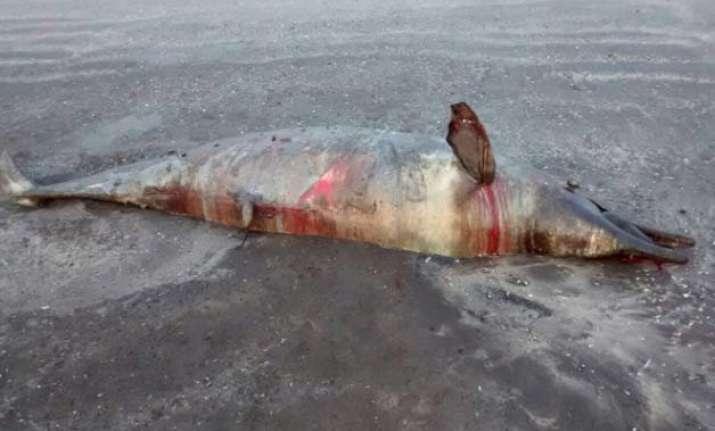 dead dolphin washed ashore at mumbai beach