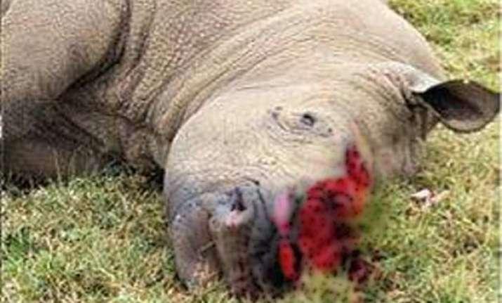 another rhino killed in assam s kaziranga national park