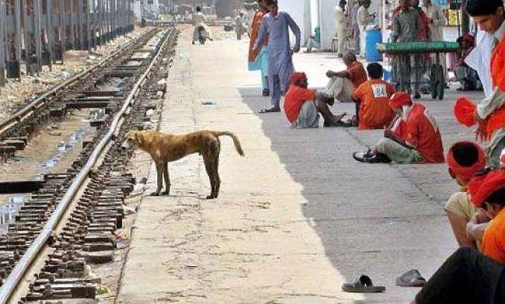 the dog who sacrificed his own life to save train