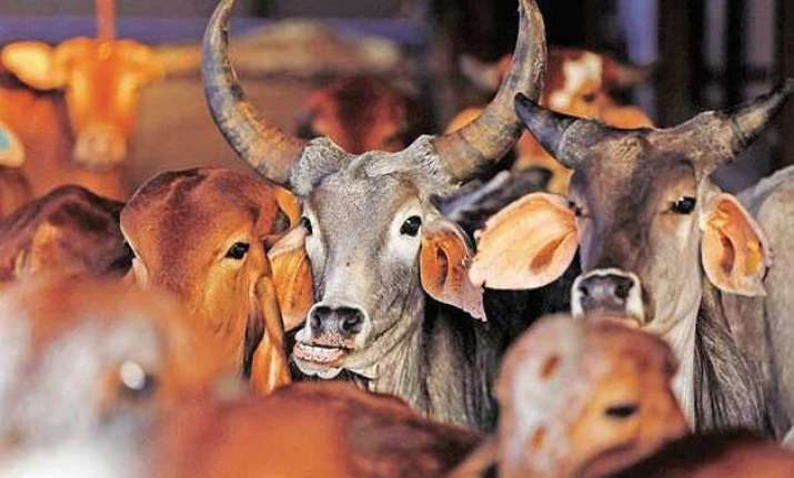 beef ban after maharashtra goa too faces beef dries