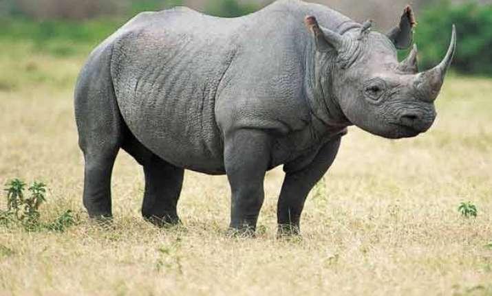 three rhinos put to death so far in 2016