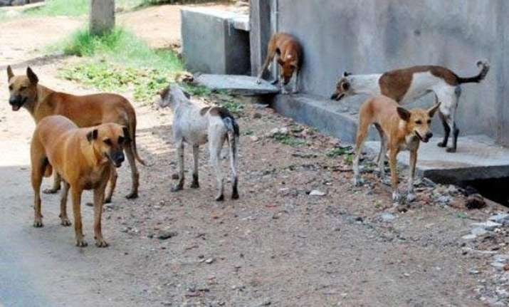up man arrested for torturing minors to cook dog meat
