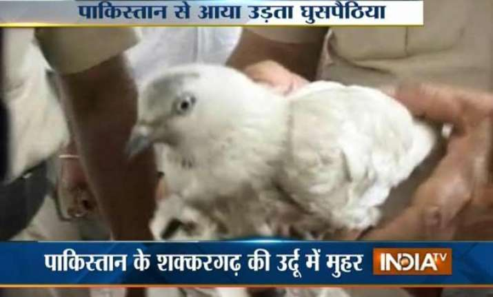 detained pakistani spy pigeon goes through x ray examination