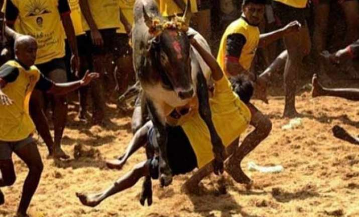 sc to hear petitions to quash jallikattu notification