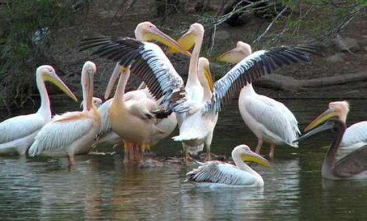 migratory birds disappearing from delhi