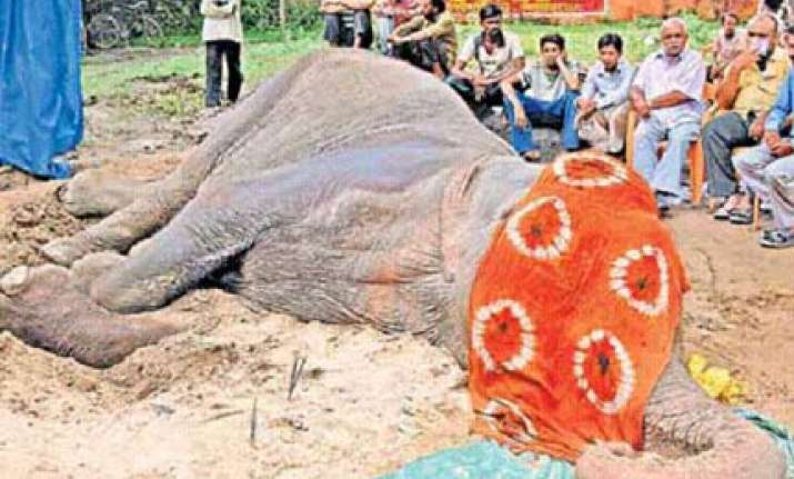 people chant prayers as female elephant lies dying in
