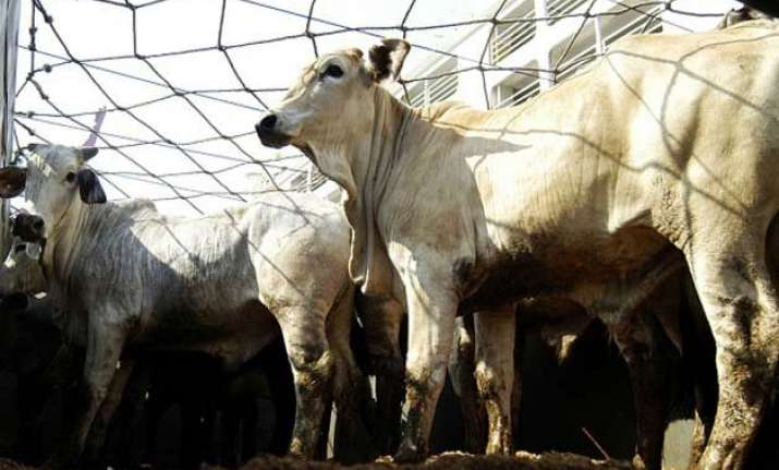 alleged cow smuggler lynched in himachal pradesh