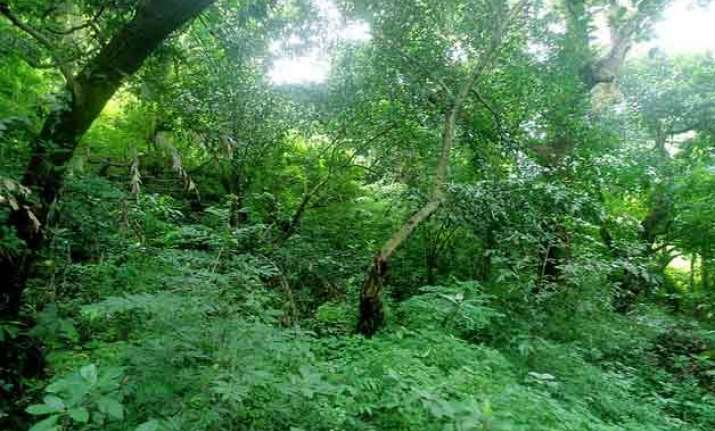 green cover in odisha threatened by mining