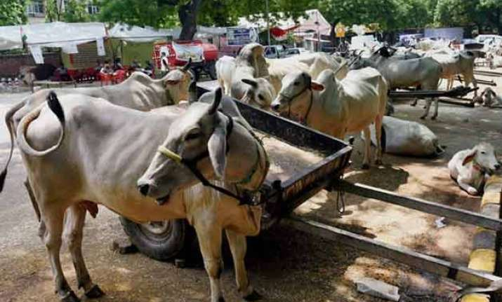 beef ban likely in haryana