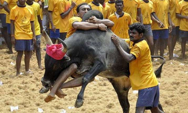 tamil nadu assures steps for conducting jallikattu