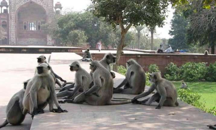 langurs to provide security at railway stations in agra