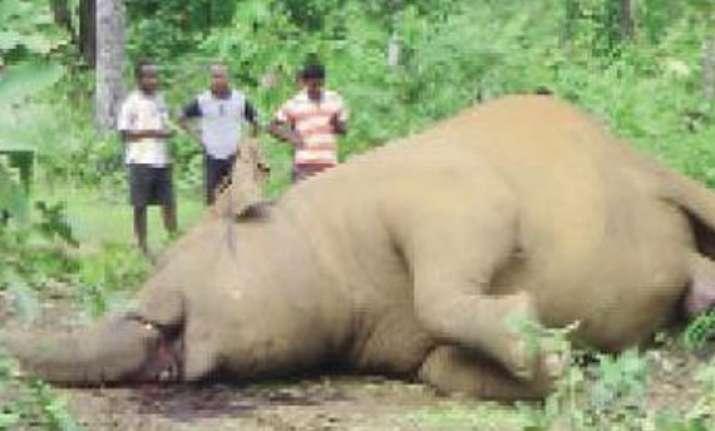pregnant elephant dies during childbirth in odisha