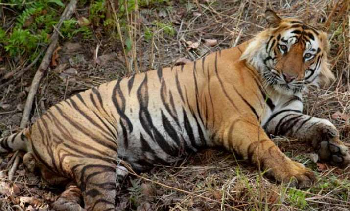 tiger population in north east up