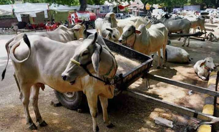 beef ban pmo seeks law ministry s opinion on cow slaughter