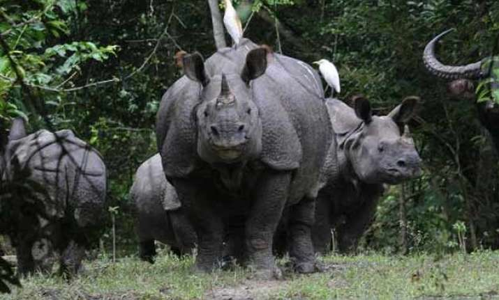 2 rhinos killed by poachers in kaziranga horns removed