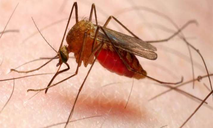 experts warn of malaria s adverse impact on reproductive