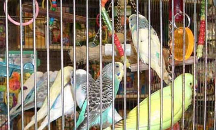 birds have fundamental rights can t be kept in cages delhi