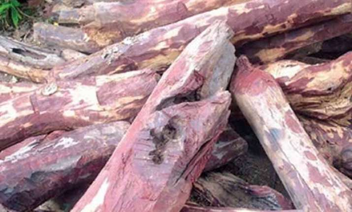 red sanders smugglers lure tribals of tamil nadu for