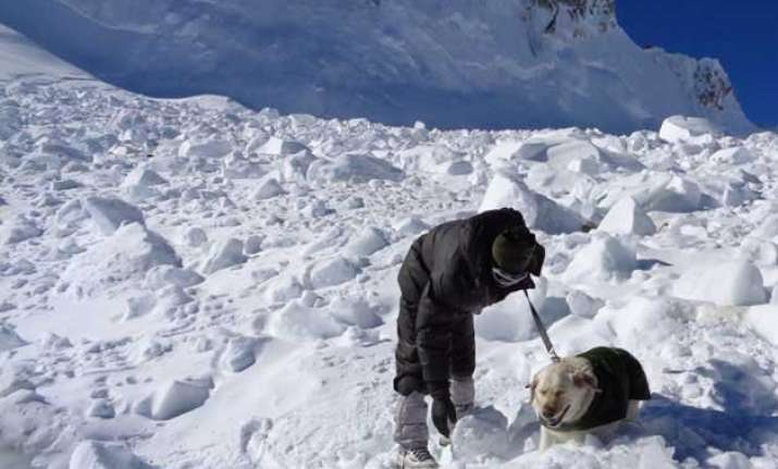 meet the two dogs which helped army rescue lance naik