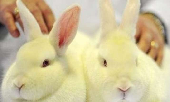 india bans import of cosmetics tested on animals