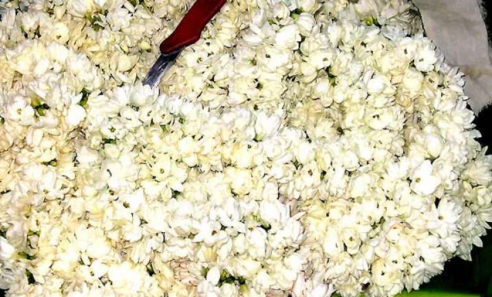 jasmine flower prices touch a high of rs 1 200 per kg