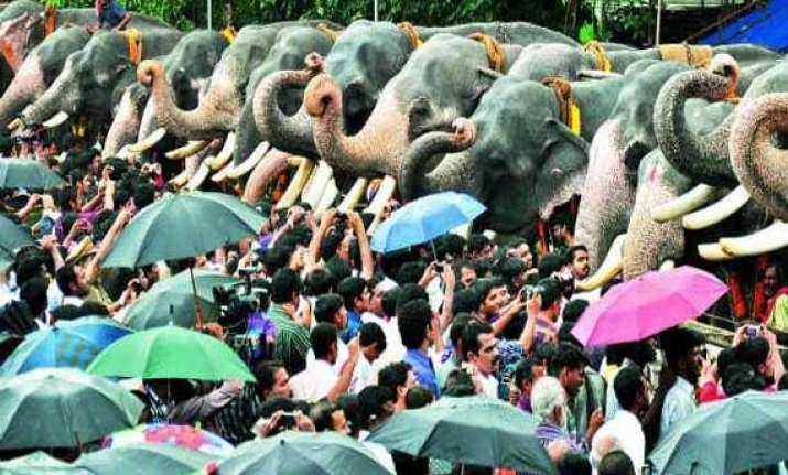 kerala elephants get sumptuous meals on gaja pooja