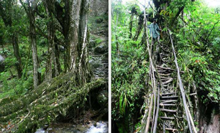 know about the amazing living tree root bridges of