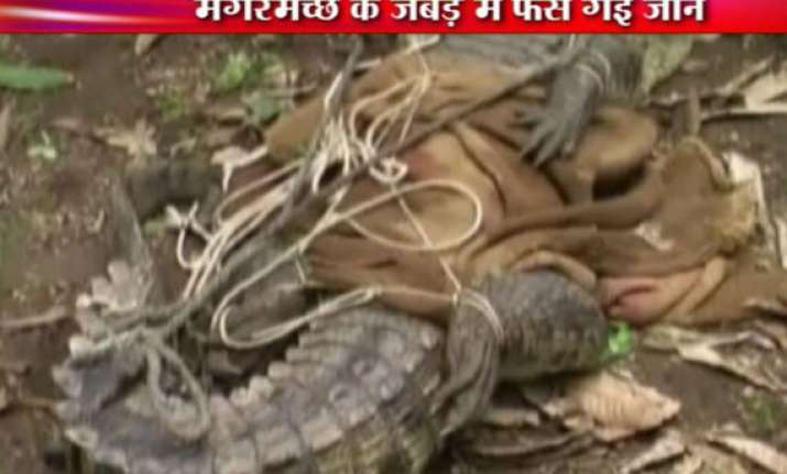 live video of gujarat crocodile attacking forest dept staff