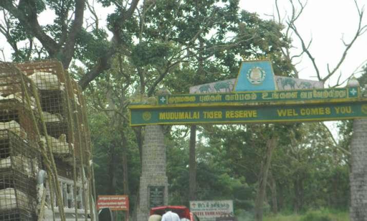 mudumalai tiger reserve thrown open to public