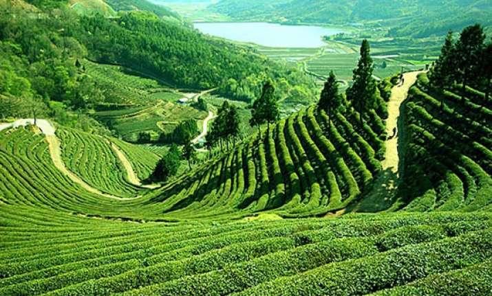 new honeymoon point lamahatta coming up near darjeeling