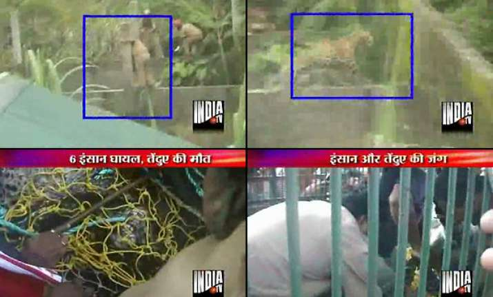 north bengal wildlife rangers kill stray leopard