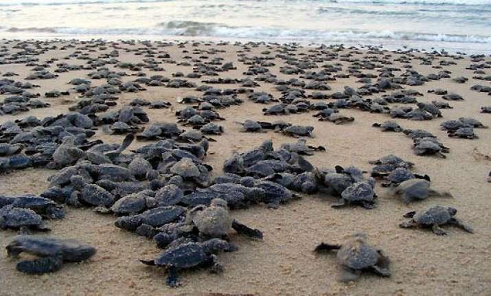 odisha plans turtle tourism