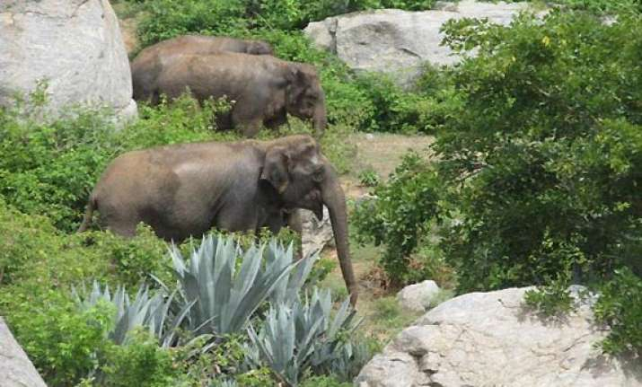 operation to push jumbos back into forest launched near