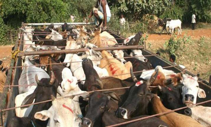 people block delhi gurgaon expressway to stop cattle