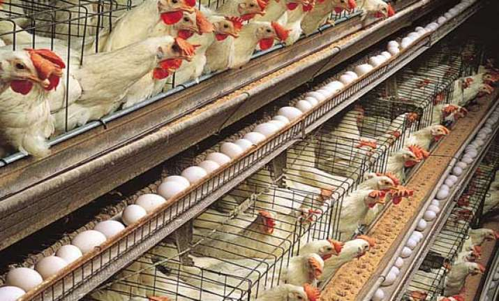 pollution control board issues notice to close poultry