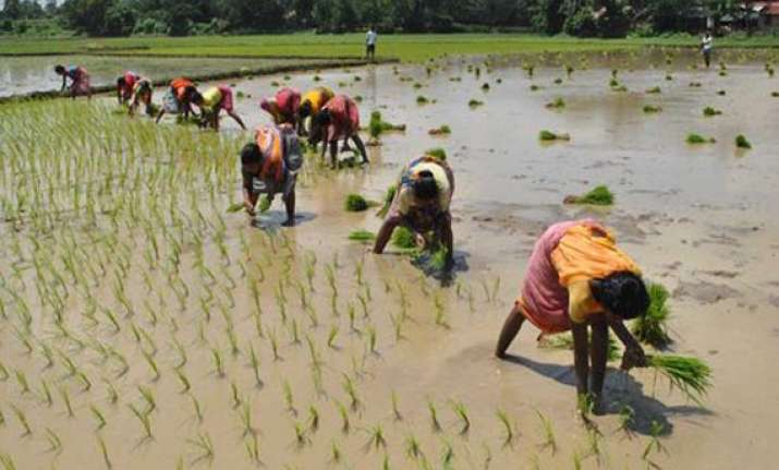 poor monsoon hits paddy sowing in bihar