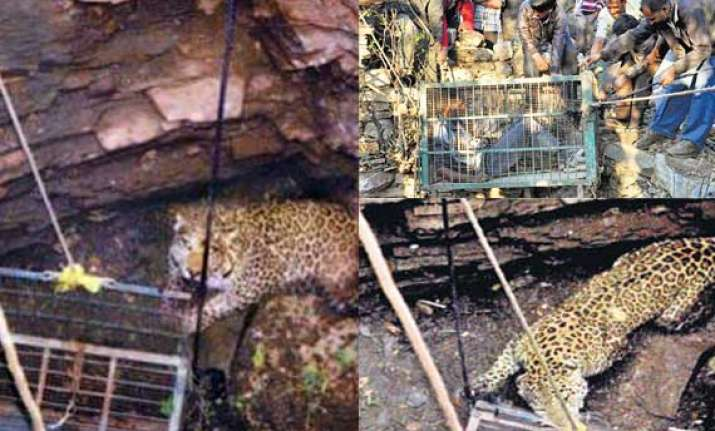 rajasthan wildlife officials trying to rescue trapped