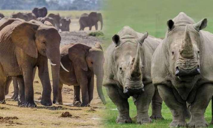 revealed elephants rhinos polar bears on the brink of