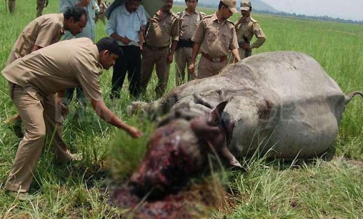 rhino killed by poachers in kaziranga national park